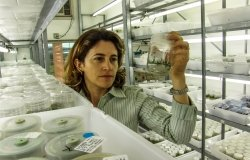 Image - Brazilian women working in a lab